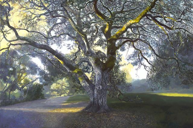 Oak #13
