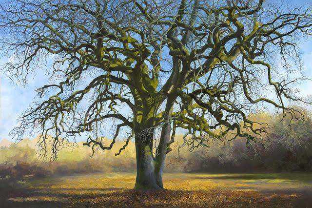 Wolpert-Landwell Oak.jpg