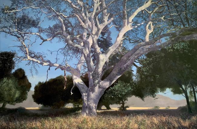 Coral Oak