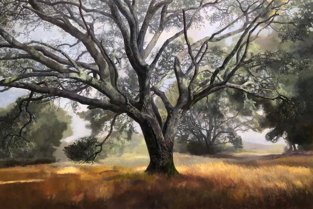 Oak Dance #6