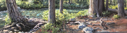 "Jarvela-Bear Crossing- acrylic on canvas 20 1/4 x 66"""