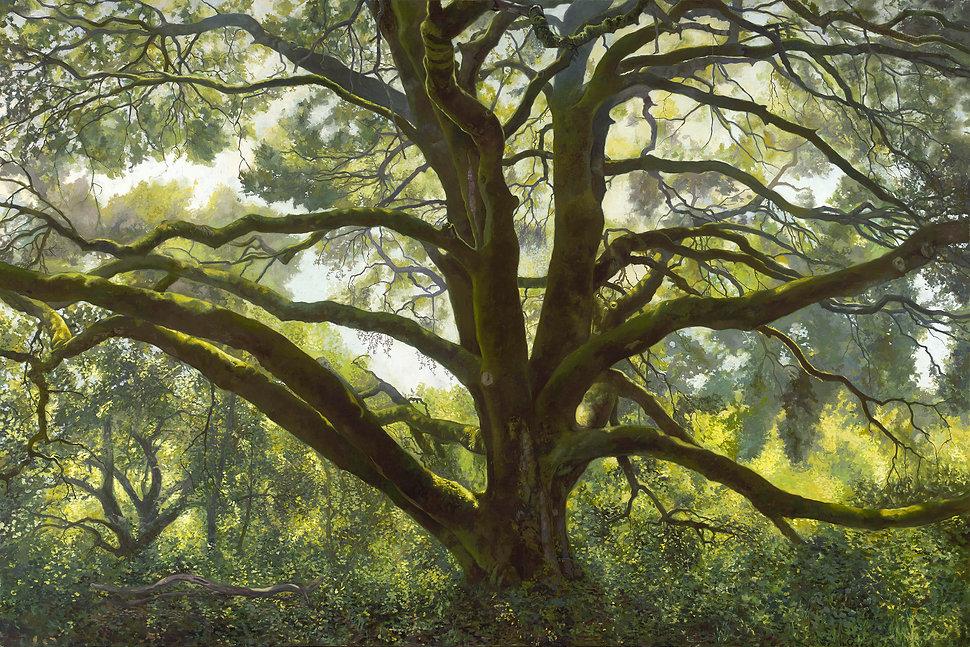 Wolpert-Memorial Oak.jpg