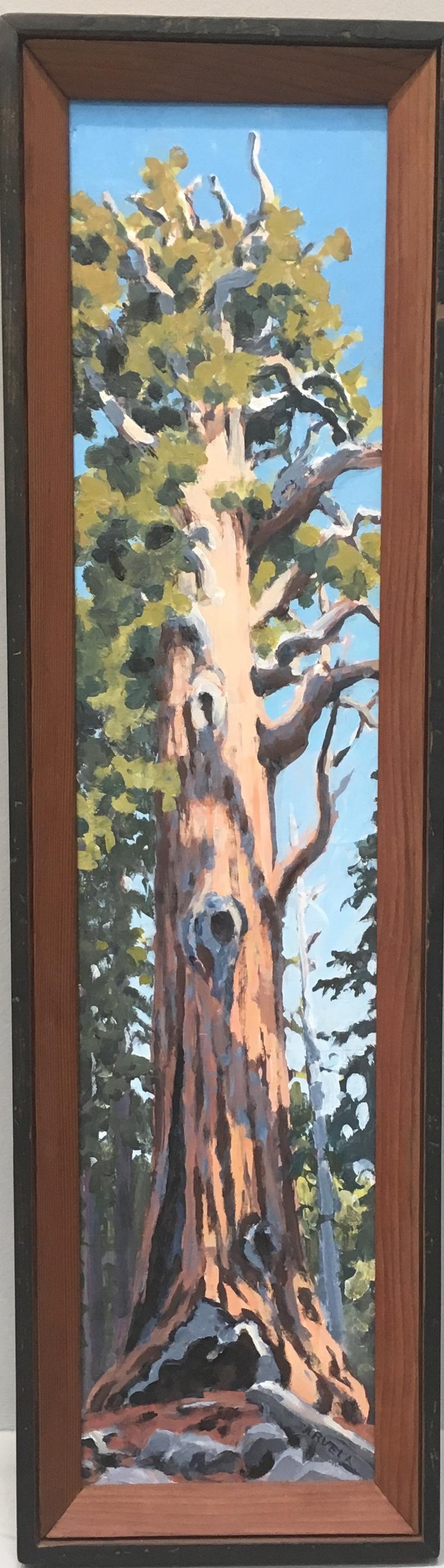 Jarvela-Chief Sequoia, 26 x 6_, $ 1200..