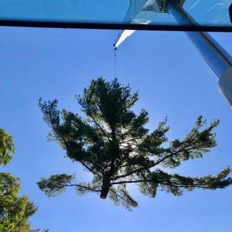 Pine Crane Removal