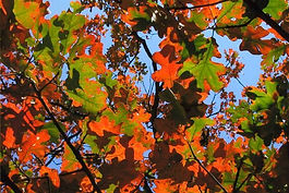 fall-photos-Oklahoma_Gann.jpg