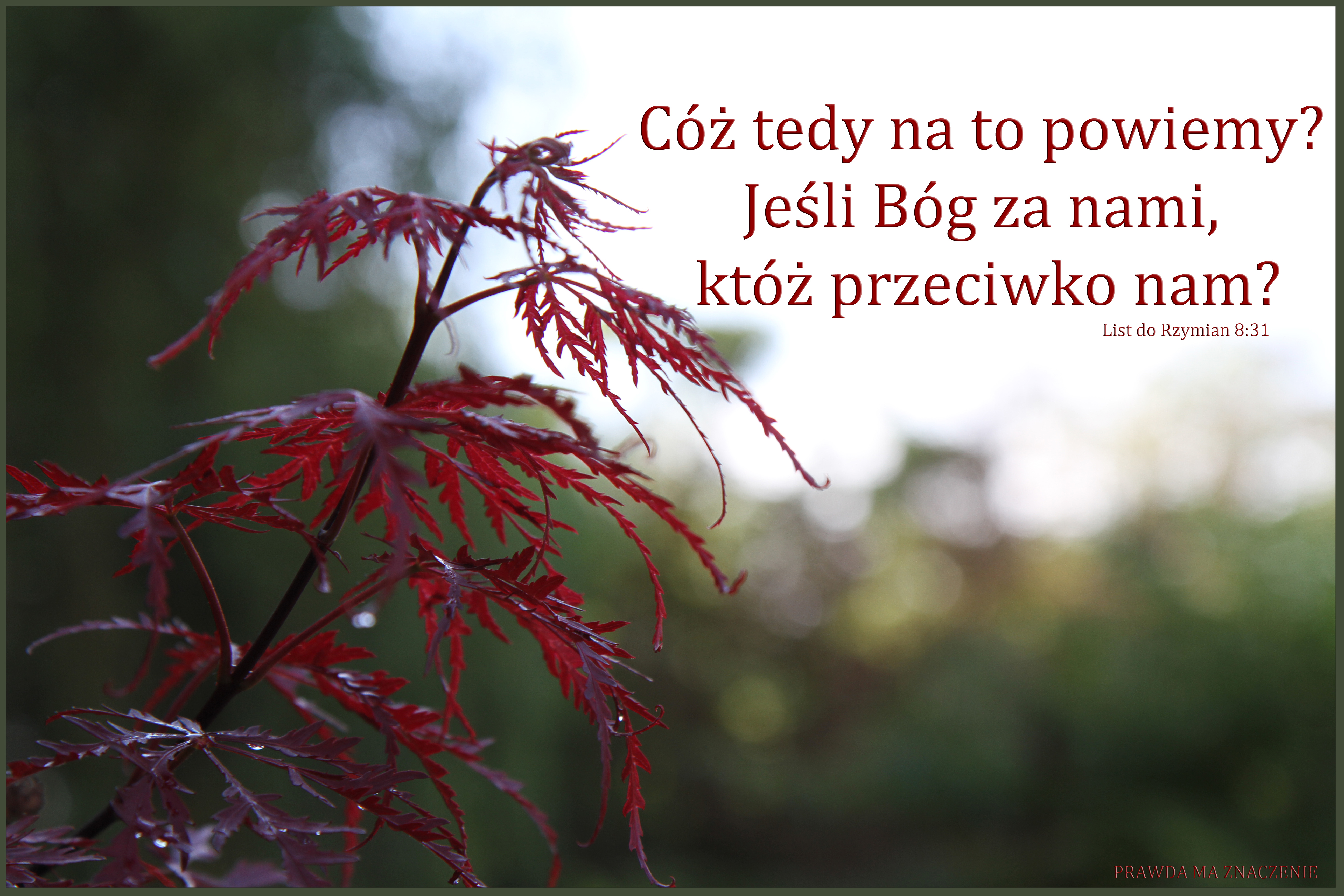 RZYM 8; 31