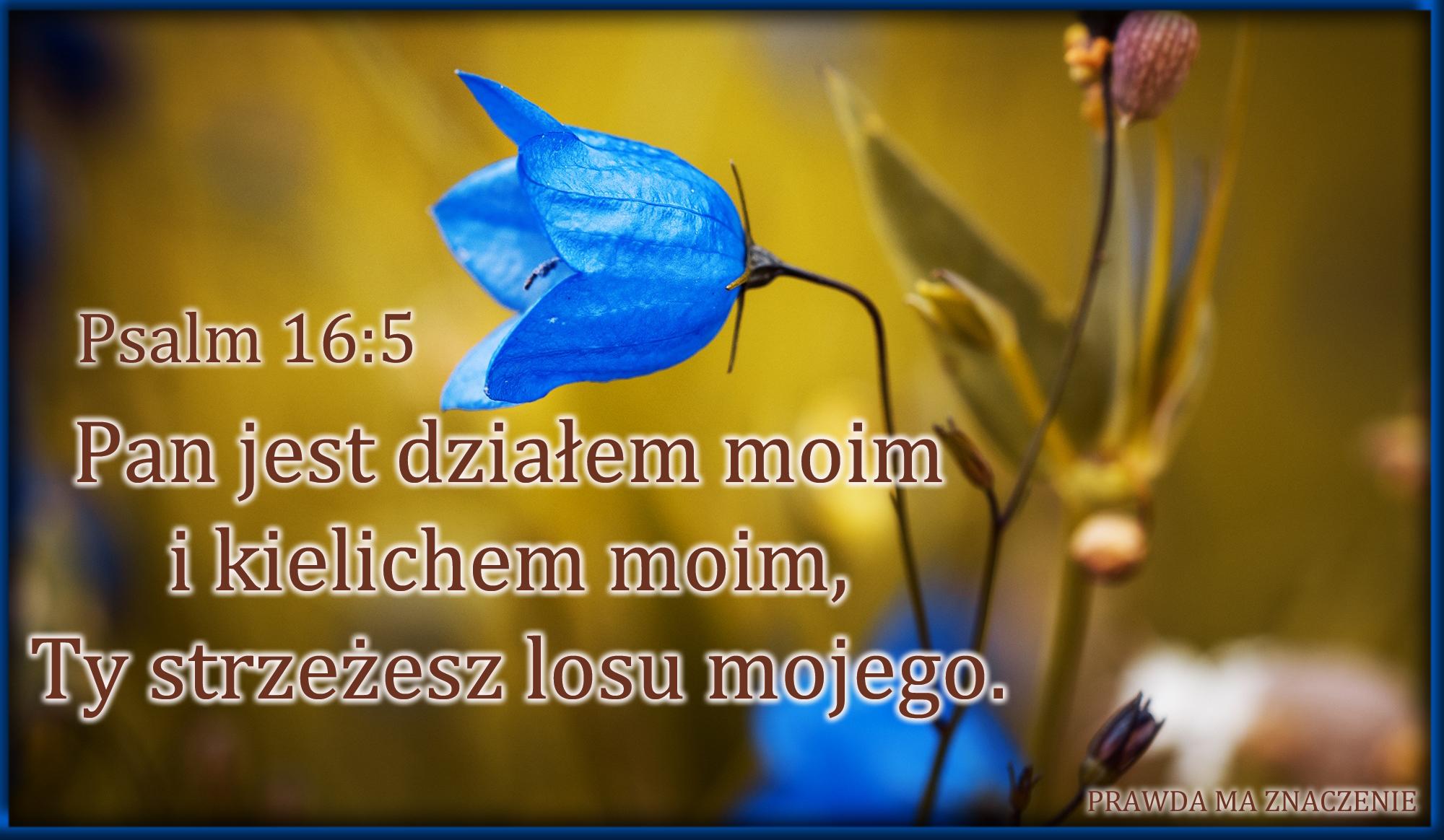 PSALM 16 5