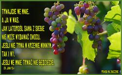 ew Jana 15 4