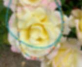 IMG_7451_edited.jpg