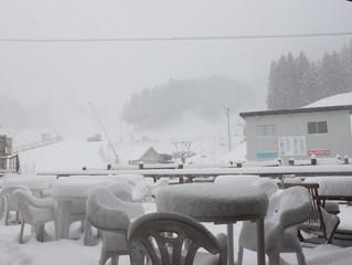 昨晩から雪が降りました!