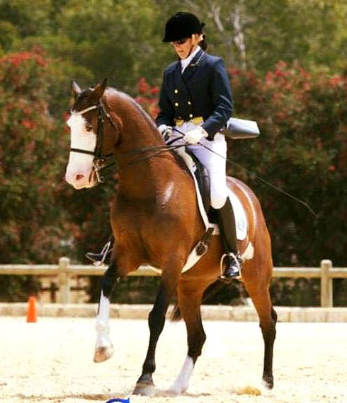 Professional Instructor and FEI Dressage