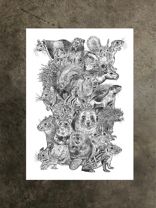 art prints by quan :: rodentia