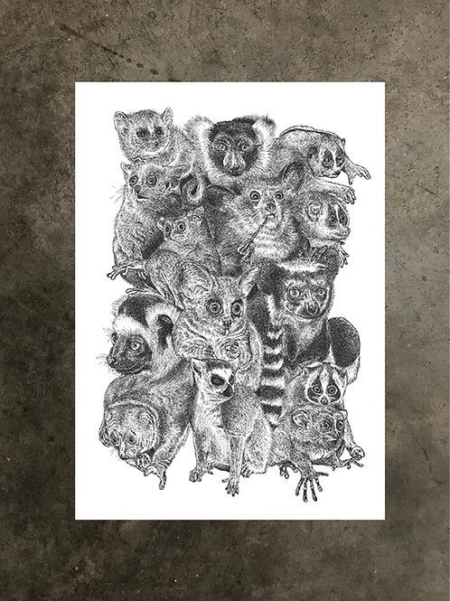 art prints by quan :: prosimian