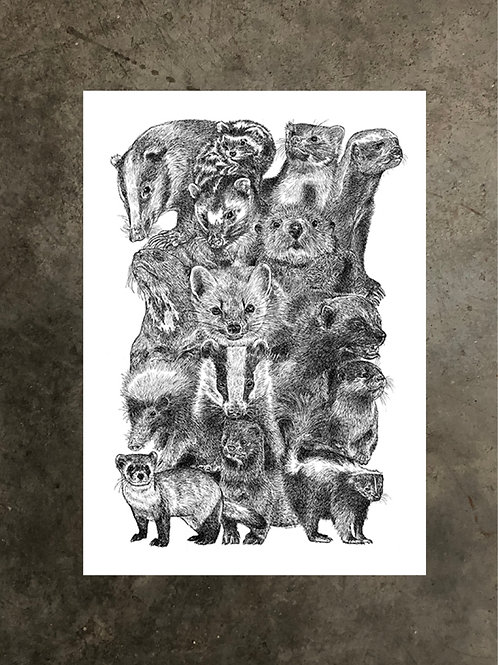 art prints by quan :: mustelidae