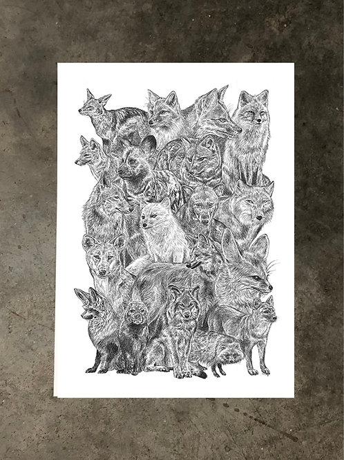 art prints by quan :: canidae