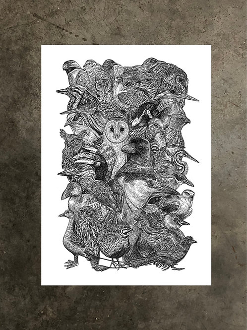 art prints by quan :: we are singapore (birds)