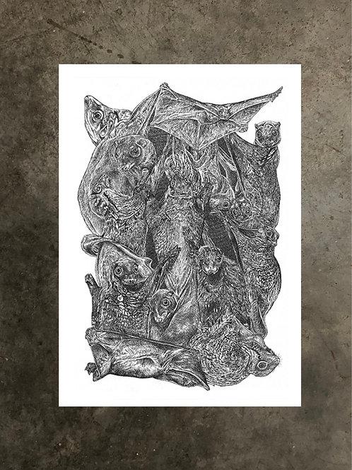 art prints by quan :: colugo