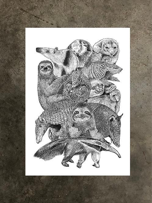 art prints by quan :: xenarthra