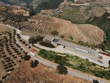 horta-osorio-wines-quinta-pontao_edited.