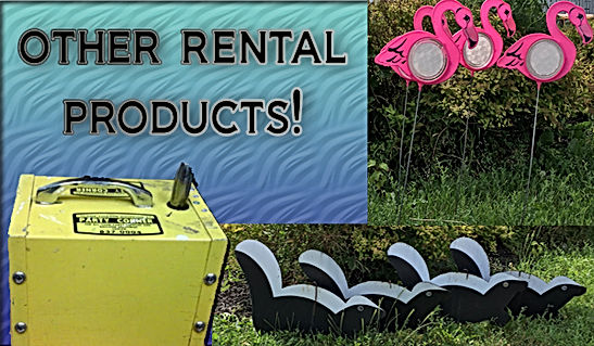 rental lawn decorations flamingos and skunks