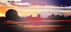 image-field-trees-filter-poprocket_edited