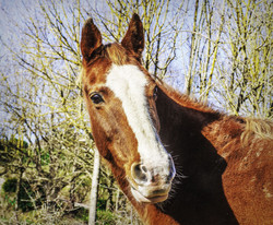 image-web-horse-3275078_1920