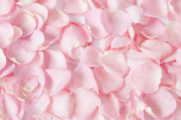 Roses petals background .jpg