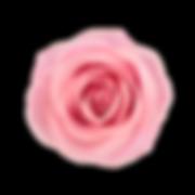 Design elemnt purple rose