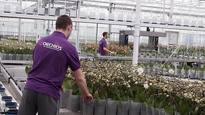 The young plants are placed on the nursery table by hand, separated according to their individual colours.