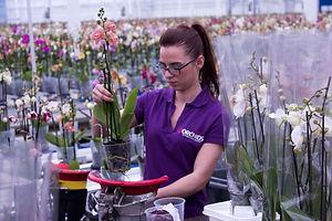 Uniek plant-order-systeem