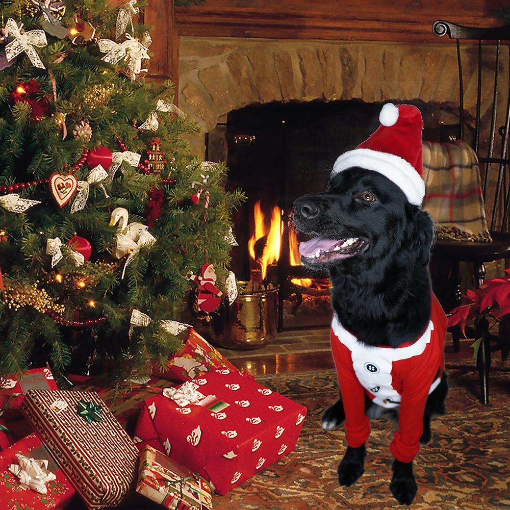 black lab mix in santa clothes