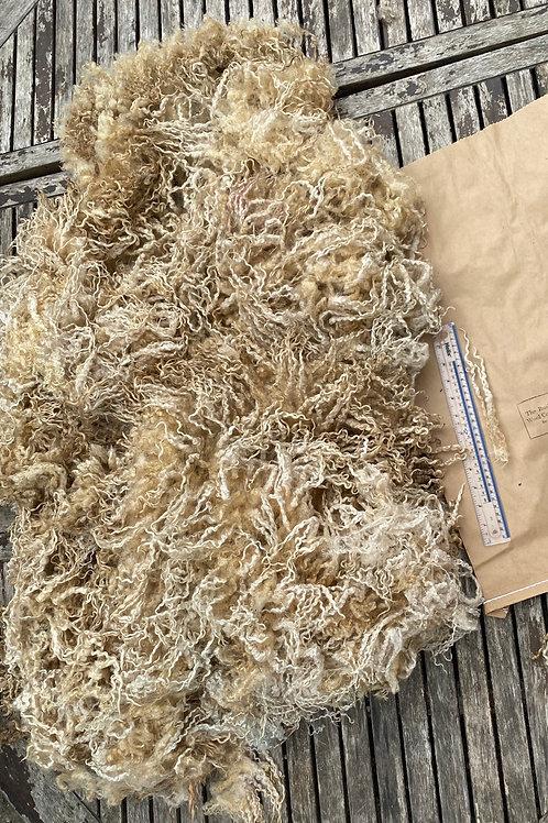 Raw Teeswater Fleece - 1.45