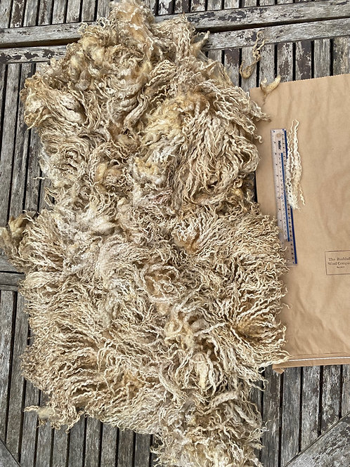 Raw Teeswater Fleece - 1.2 kg