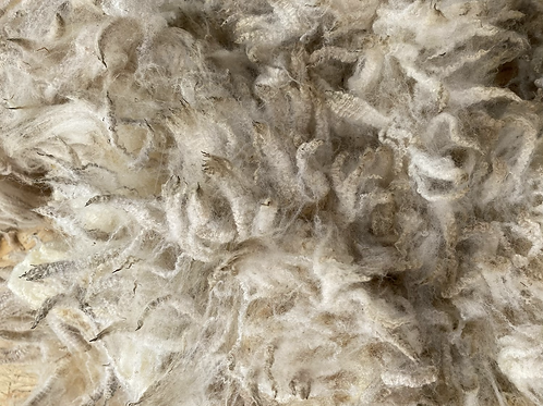 Raw Dartmoor Merino fleece - 950g