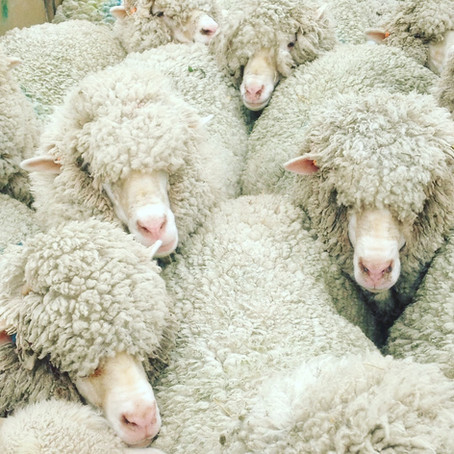 Finding the value in the Fleece