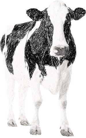 DairyCow_charcoal1.jpg