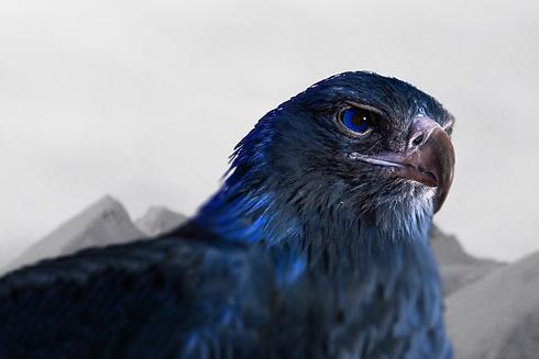 blue eagle-2.png