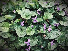 SHARING SECRETS: Signatures of Garden Love