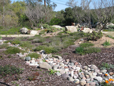 PERMACULTURE: Prepare For Water Harvest Now!