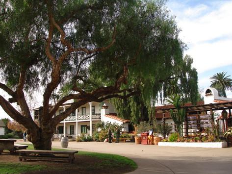 TREES, PLEASE! Tree Watch – Minding Your Elders