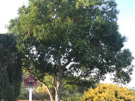 FROM THE PALOMAR DISTRICT: Plant America - Plant Trees