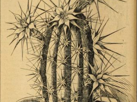 APRIL FOOL'S DAY BOTANY: Echinocereus dahliaeflorus
