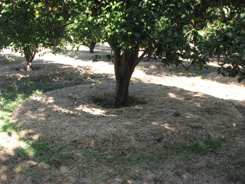 FALLBROOK FOOD FOREST: Permaculture and Water