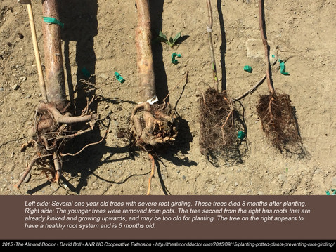 TREES, PLEASE: Have You Examined Tree Roots Lately?