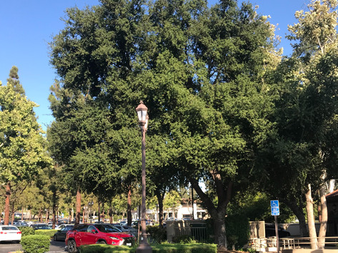 TREES, PLEASE: My Tree, iTree.
