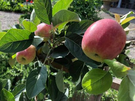 GARDEN SURROUNDINGS: Mom and Apple Pie!