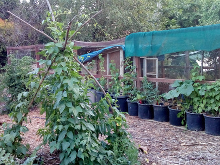 PERMACULTURE: Vertical Space