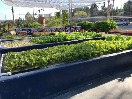 PUBLIC SCHOOL GARDEN GRANTS: Abraxas High School.
