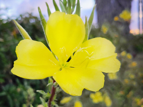 GUEST COLUMN: Recognize this Wildflower?