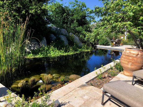 """GOING WILD WITH NATIVES: """"The Artful California Native Gardens of East County"""" CNPS-SD Tour"""